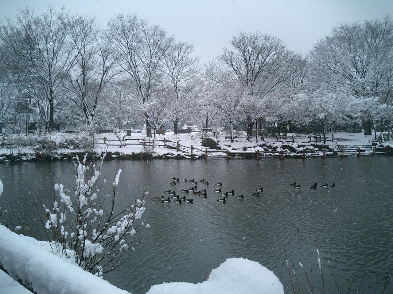 雪景色と鳥の群れ